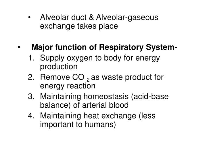 Alveolar duct & Alveolar-gaseous exchange takes place