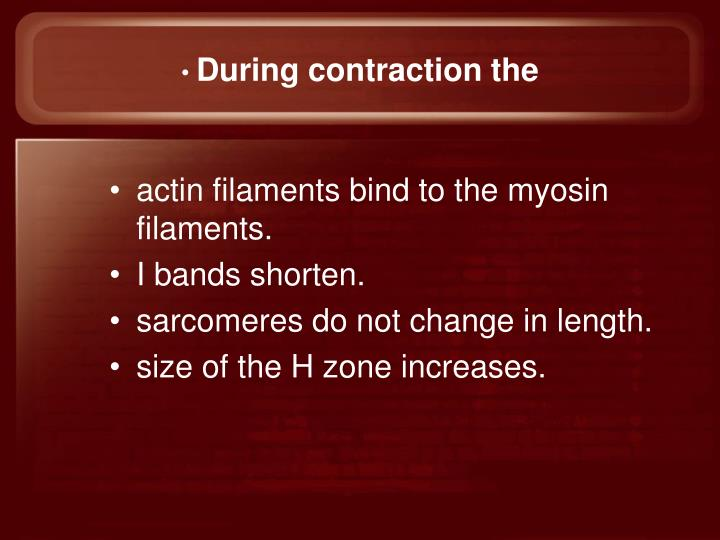 During contraction the