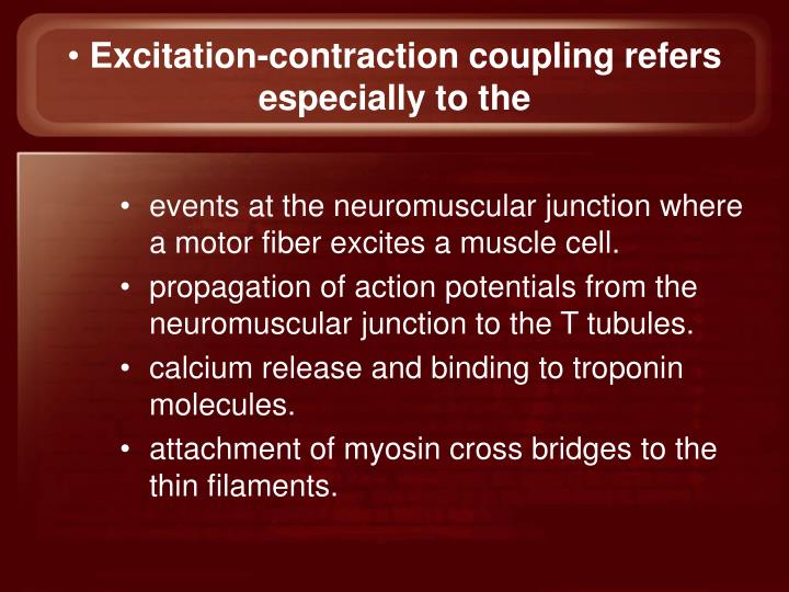 Excitation-contraction coupling refers especially to the