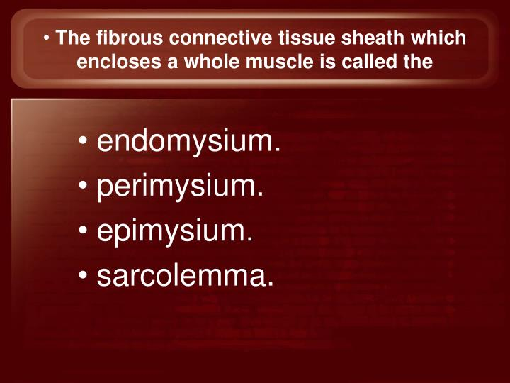 The fibrous connective tissue sheath which encloses a whole muscle is called the