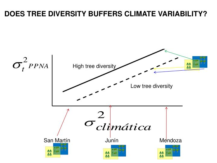 DOES TREE DIVERSITY BUFFERS CLIMATE VARIABILITY?