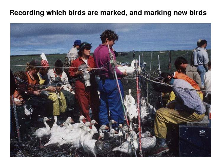 Recording which birds are marked, and marking new birds