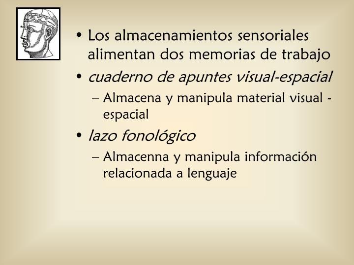 Los almacenamientos sensoriales alimentan dos memorias de trabajo