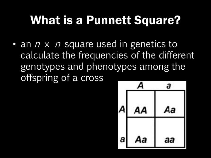 What is a Punnett Square?
