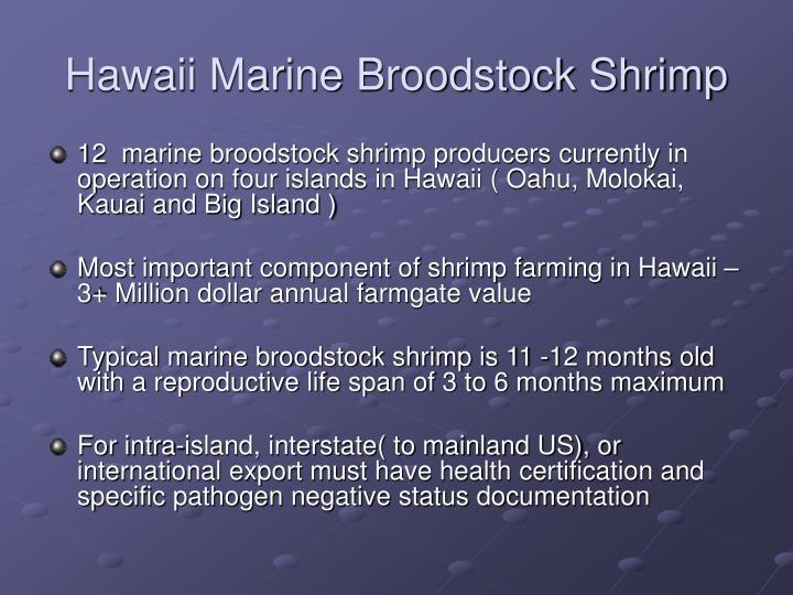 Hawaii Marine Broodstock Shrimp