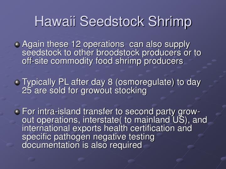 Hawaii Seedstock Shrimp