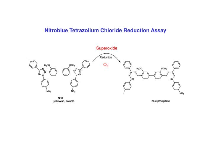 Nitroblue Tetrazolium Chloride Reduction Assay
