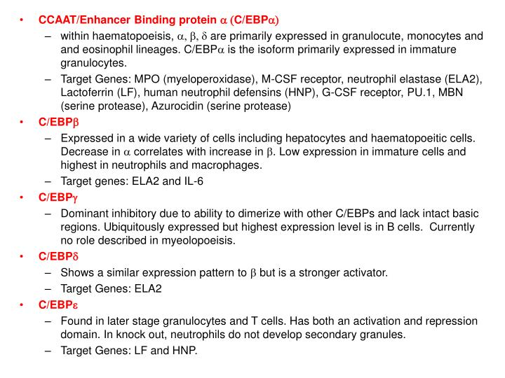 CCAAT/Enhancer Binding protein