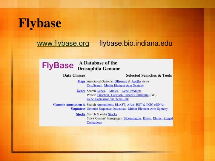 Flybase