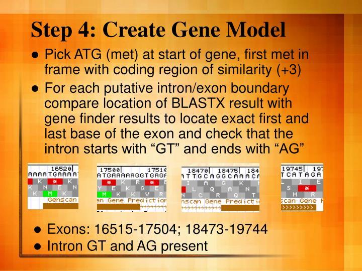 Step 4: Create Gene Model