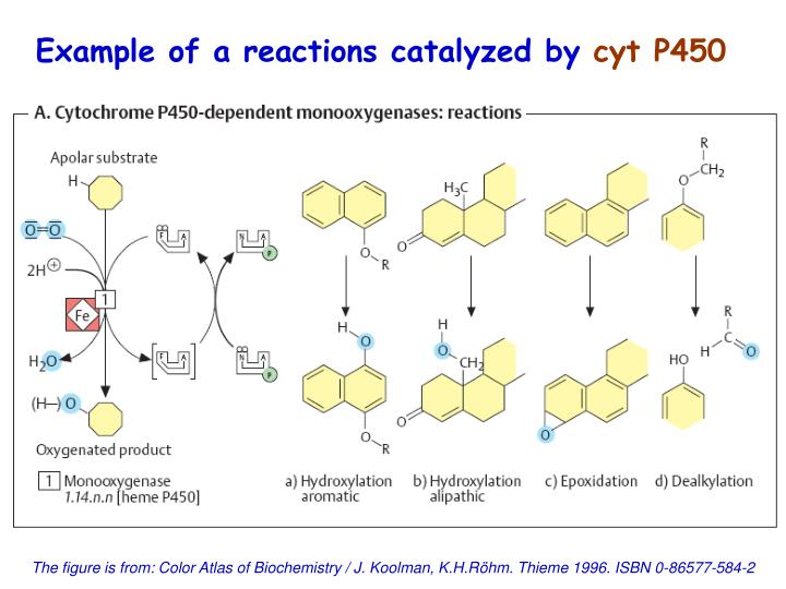 Example of a reactions catalyzed by
