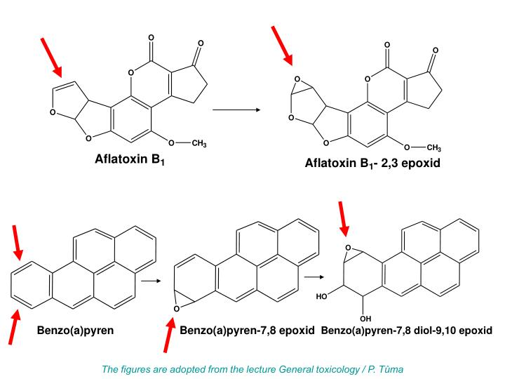 The figures are adopted from the lecture General toxicology / P. Tůma