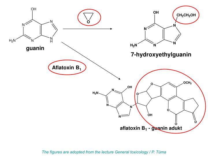 Aflatoxin B