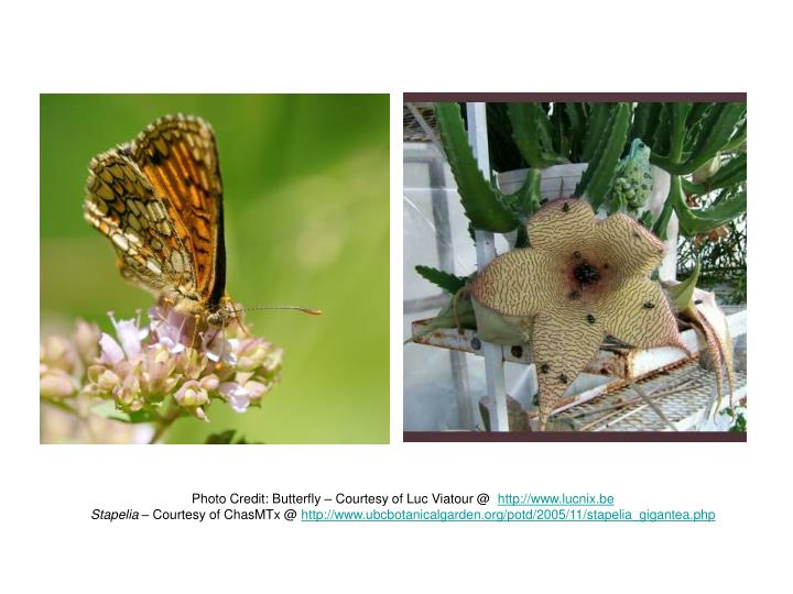Photo Credit: Butterfly – Courtesy of Luc Viatour @