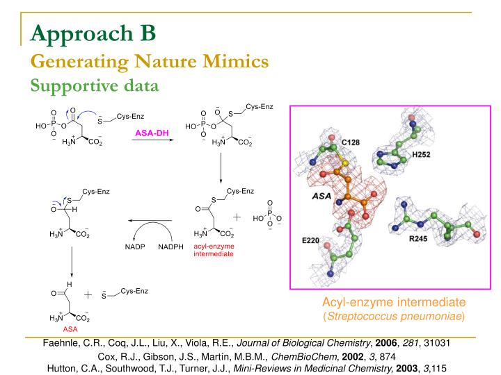 Acyl-enzyme intermediate