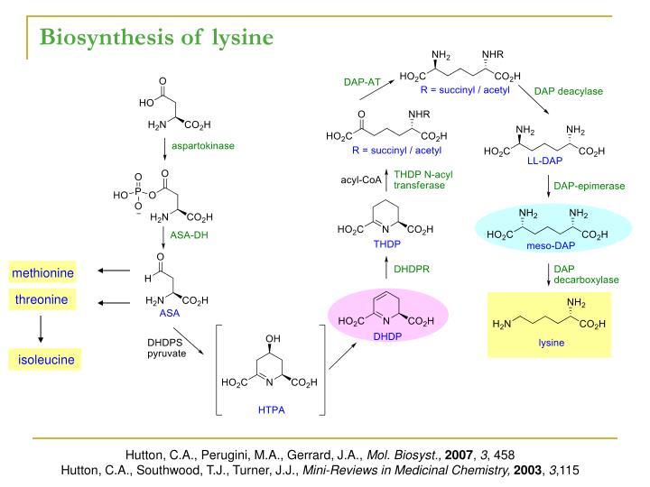 Biosynthesis of lysine