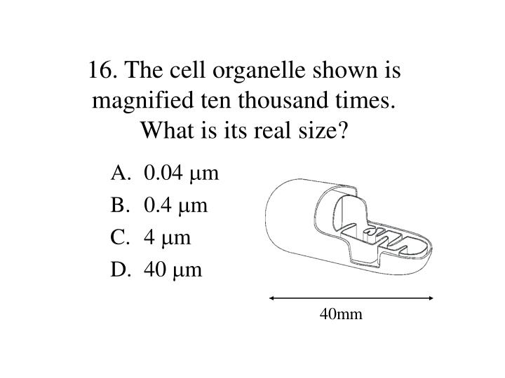 16. The cell organelle shown is magnified ten thousand times.