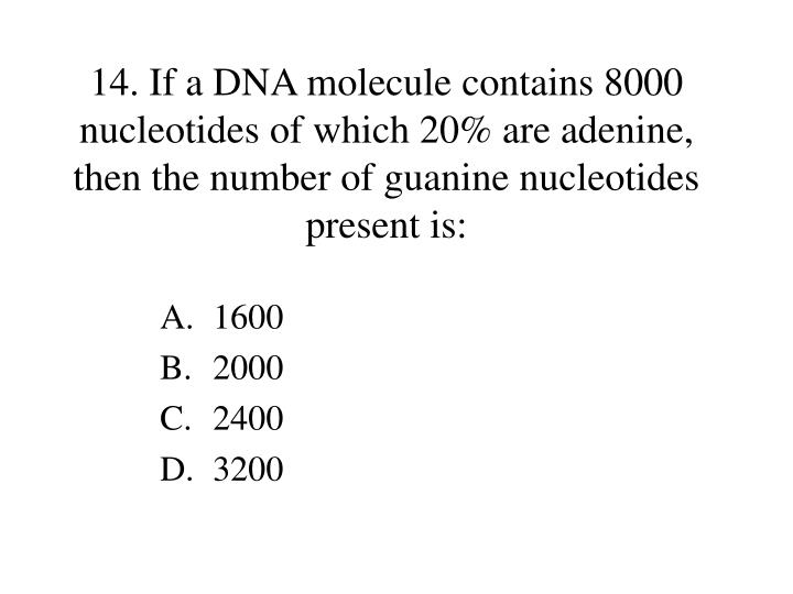 14. If a DNA molecule contains 8000 nucleotides of which 20% are adenine, then the number of guanine nucleotides present is: