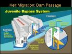 kelt migration passage