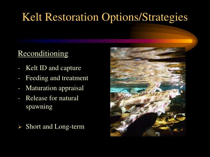 Kelt Restoration Options/Strategies