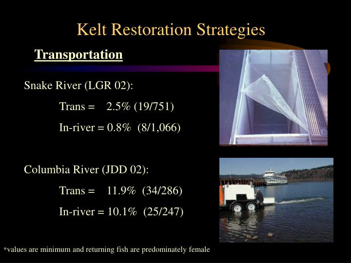 Kelt Restoration Strategies