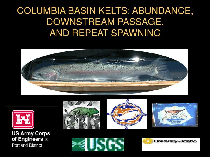 COLUMBIA BASIN KELTS: ABUNDANCE, DOWNSTREAM PASSAGE,