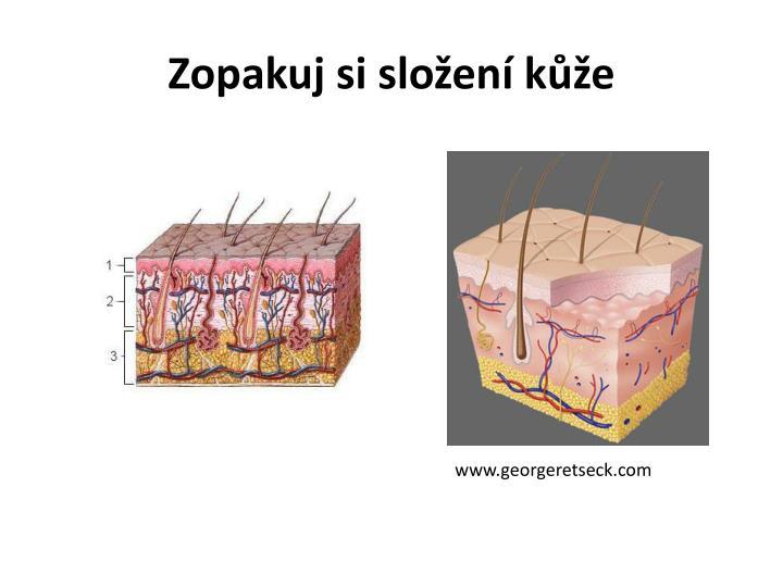 Zopakuj si složení kůže