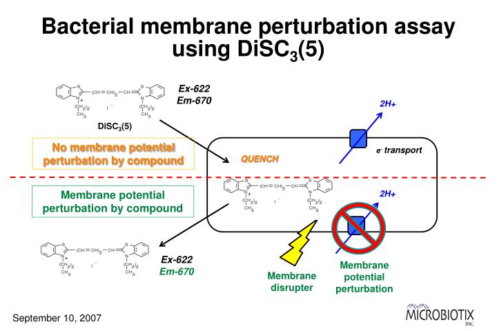 Bacterial membrane perturbation assay using DiSC