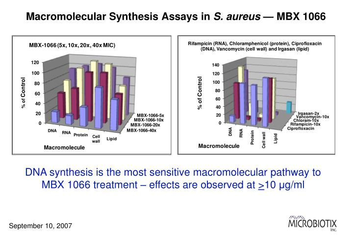 Macromolecular Synthesis Assays in