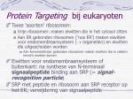 protein targeting bij eukaryoten