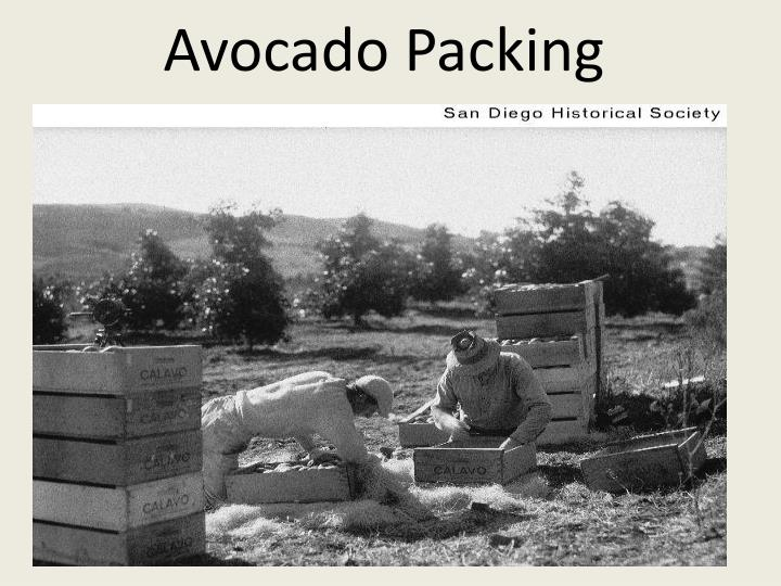 Avocado Packing