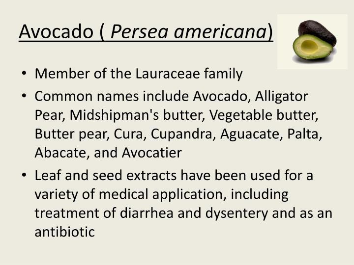 Avocado (