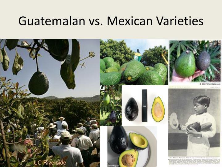 Guatemalan vs. Mexican Varieties