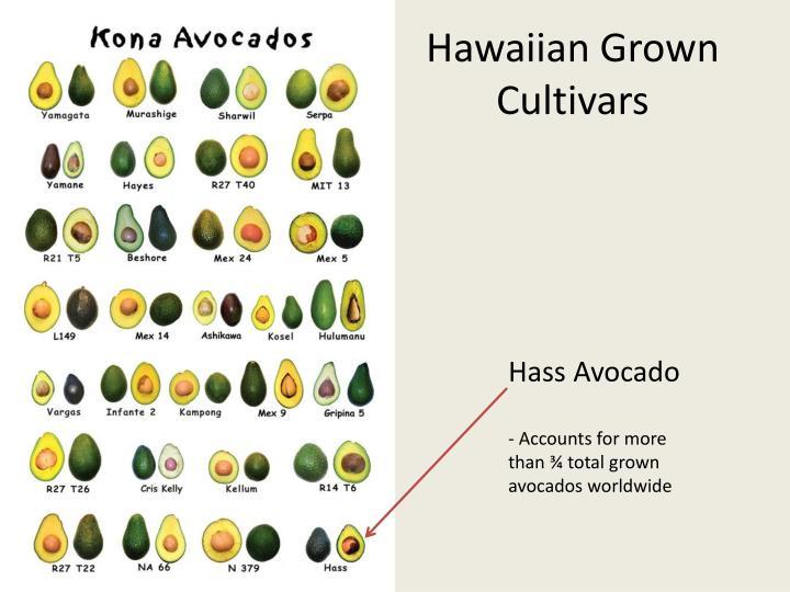 Hawaiian Grown Cultivars