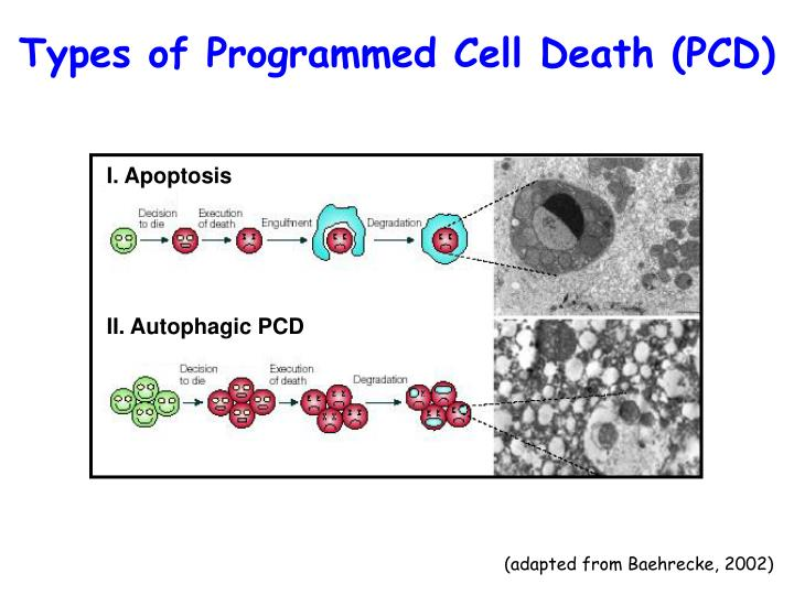 Types of Programmed Cell Death (PCD)