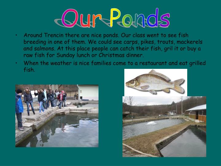 Our Ponds