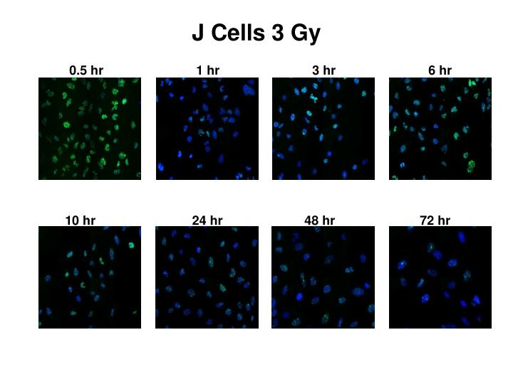 J Cells 3 Gy