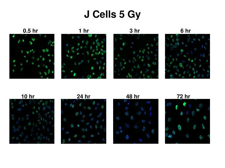 J Cells 5 Gy