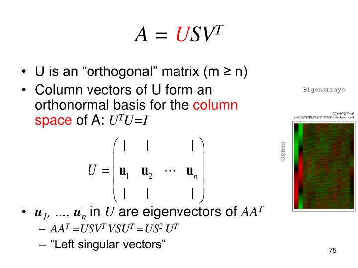 "U is an ""orthogonal"" matrix (m ≥ n)"