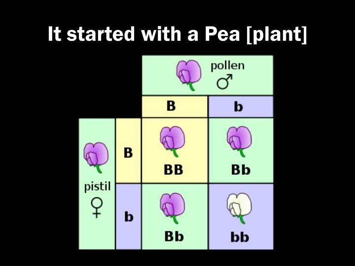 It started with a Pea [plant]