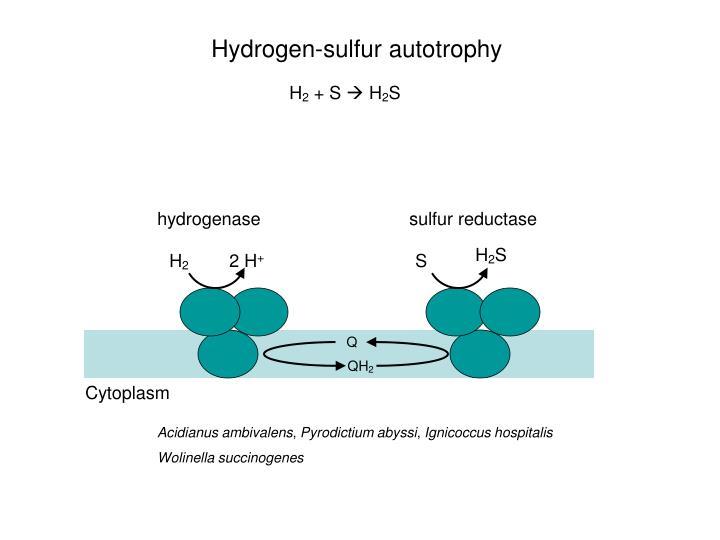 hydrogenase
