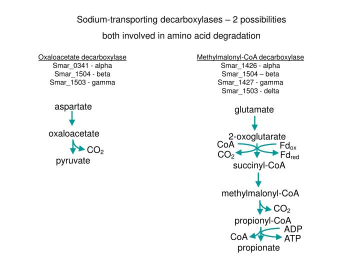 Sodium-transporting decarboxylases – 2 possibilities