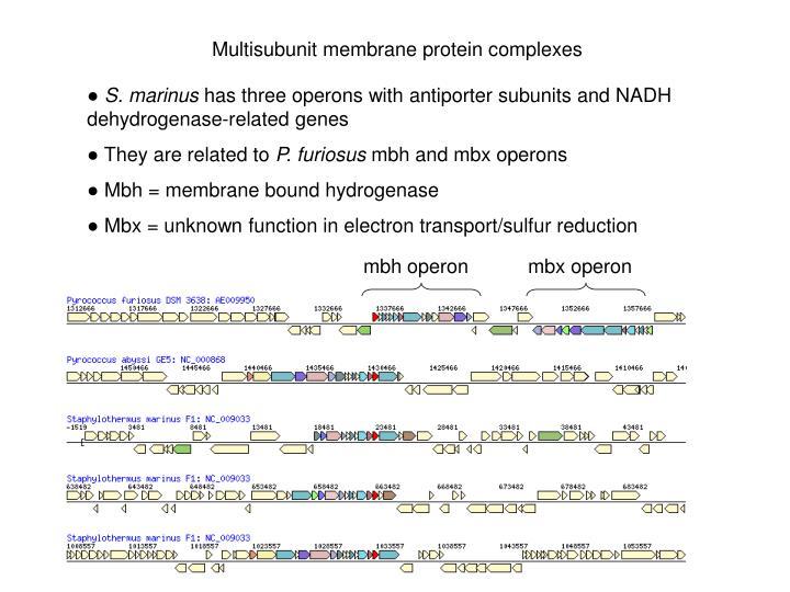 Multisubunit membrane protein complexes