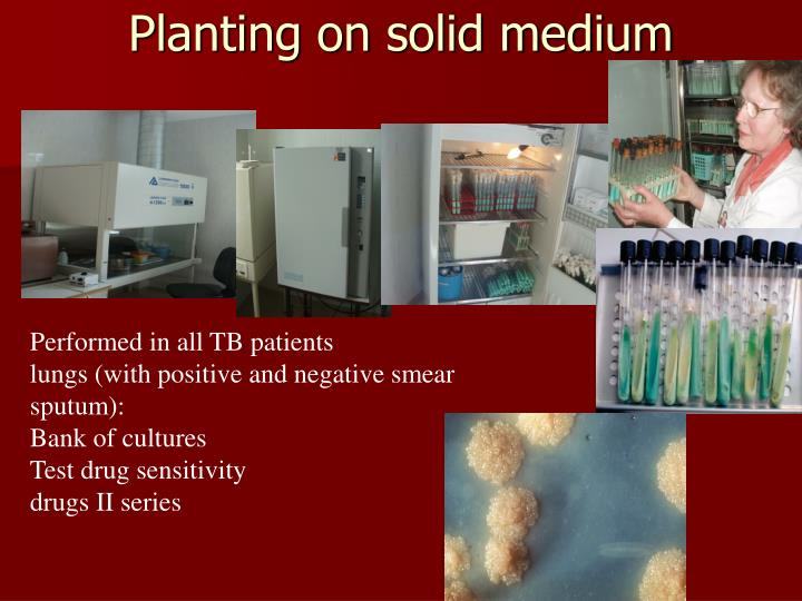 Planting on solid medium