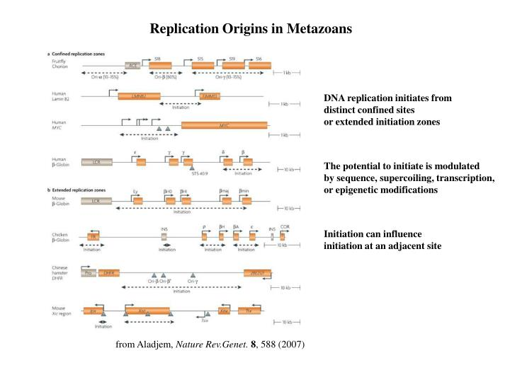 Replication Origins in Metazoans