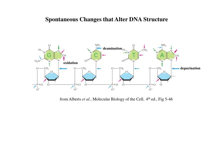 Spontaneous Changes that Alter DNA Structure