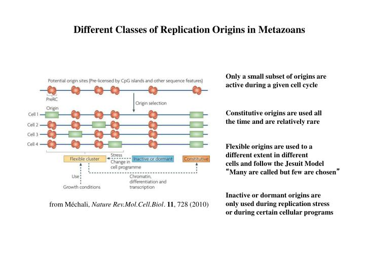 Different Classes of Replication Origins in Metazoans