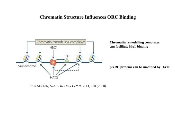 Chromatin Structure Influences ORC Binding