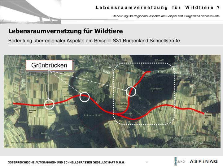 Bedeutung überregionaler Aspekte am Beispiel S31 Burgenland Schnellstraße