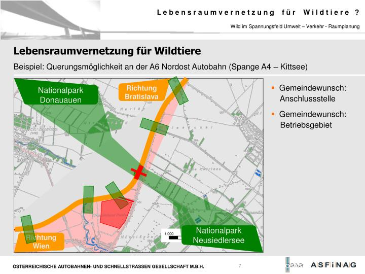Wild im Spannungsfeld Umwelt – Verkehr - Raumplanung